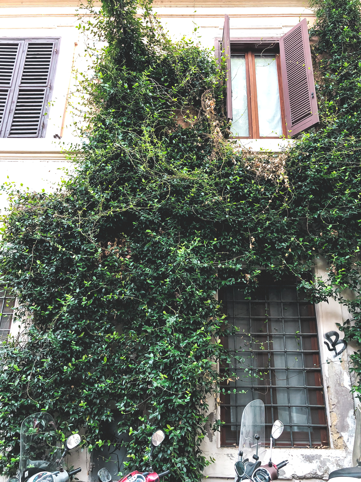 vines growing on the side of a building in Trastevere